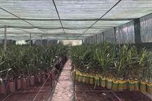 فرصت 10 روزه به متقاضیان احداث گلخانه در شوش