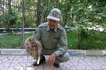 صیاد توله گرگ توسط ماموران محیط زیست زنجان دستگیر شد