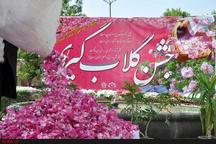 ظرفیت تولید و عطر گلاب مازندران ده برابر گلاب قمصر کاشان است