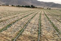 بیش از50 درصد زمین کشاورزی هرمزگان شور است