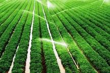 آبیاری نوین میانگین تولید را 30 درصد افزایش می دهد