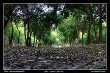 حفاظت از 345 هزار هکتار جنگل و مرتع در دزفول ضروری است