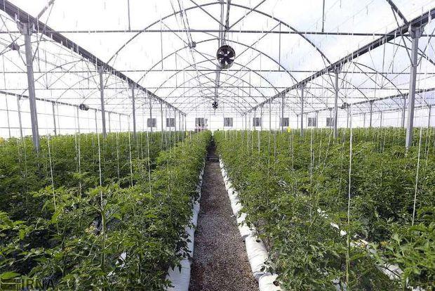 ۲۸ میلیارد ریال تسهیلات احداث گلخانه در قزوین پرداخت شد