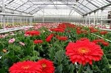 تولید 414 میلیونی گل و گیاه در گلخانه های مازندران