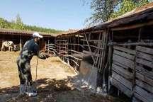 سمپاشی 89 روستای نوشهر، چالوس و کلاردشت برای پیشگیری از تب کنگو