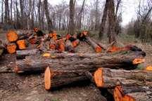 رسیدگی خارج از نوبت به پرونده چوب خواری در مازندران