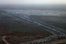 ۹۰ درصد ظرفیت پارکینگ های مهران خالی از خودرو زائران شد