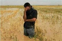 خسارت سیلاب به کشاورزی همدان بیش از سه هزار میلیارد ریال است