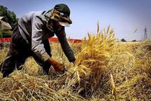 محلات یک و نیم برابر اعتبار مصوب اشتغال روستایی را جذب کرد