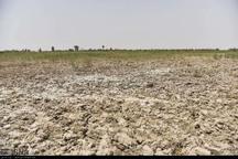 خشکسالی 154 میلیارد تومان به کشاورزان هامون خسارت وارد کرد