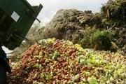 پسماند کشاورزی در آستارا به محل دفن زباله منتقل شود