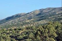 سرانه فضای سبز مهاباد 4.5 مترمربع کمتر از استاندارد کشوری است