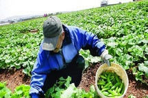 46 میلیارد ریال تسهیلات اشتغال در بخش کشاورزی گناباد پرداخت شد