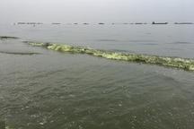 وجود جلبک در دریای خزر ، نشانه افزایش آلودگی است