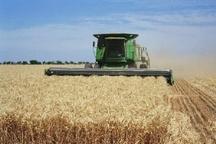 بیش از پنج هزار تن گندم از کشاورزان ایوان خریداری شد