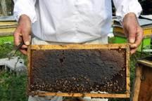 شهروند مهریزی، درآمد زنبور عسل خود را به عتبات عالیات اهدا کرد