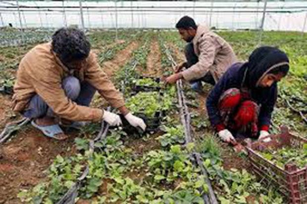 فرماندار تالش دهیاران را به اجرای طرحهای درآمدزا فراخواند