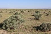 تولید علوفه در مراتع اصفهان 20 درصد افزایش می یابد