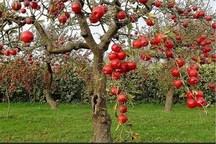 ۱۲ هزار هکتار از باغهای استان سمنان در طرح اصلاح قرار گرفت