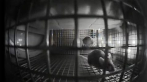 ناسا موش به فضا فرستاد + اولین ویدیوی ارسالی