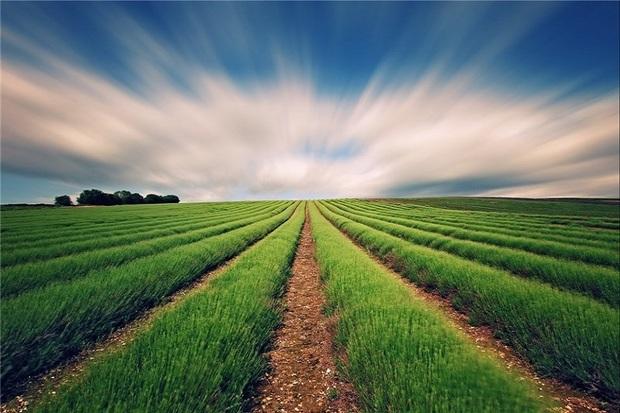 12 طرح فناور در مرکز رشد  کشاورزی اردبیل اجرا میشود