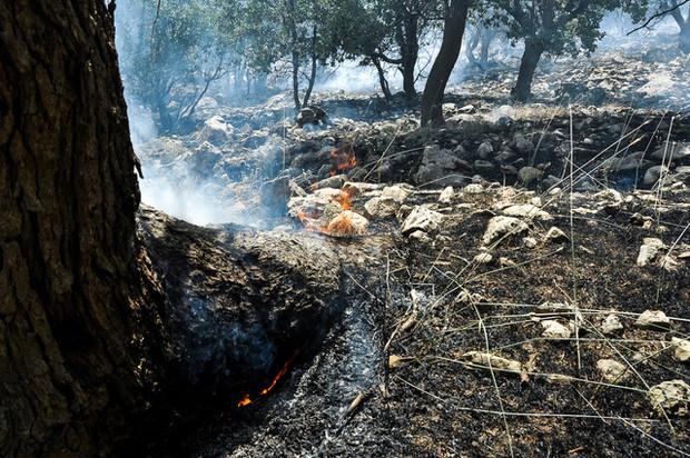 جزییات آتشسوزی عمدی در ایلام
