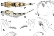 شناسایی ۱۸ گونه جدید از حشرات آبزی