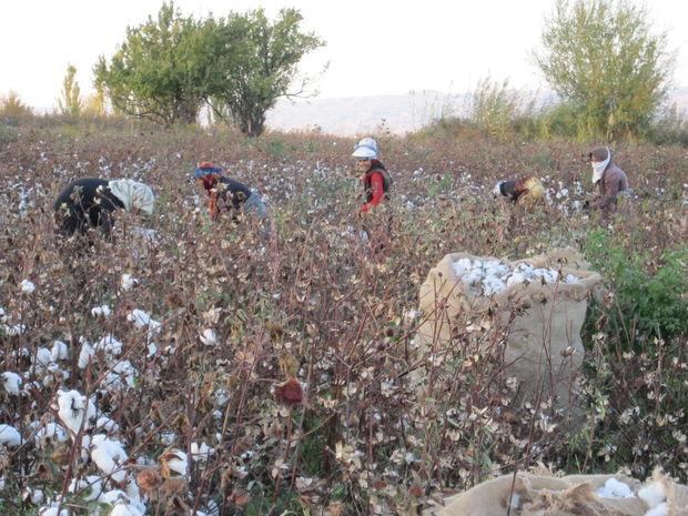 بانک کشاورزی خراسان شمالی وام بیش از ۲ هزار کشاورز را امهال کرد