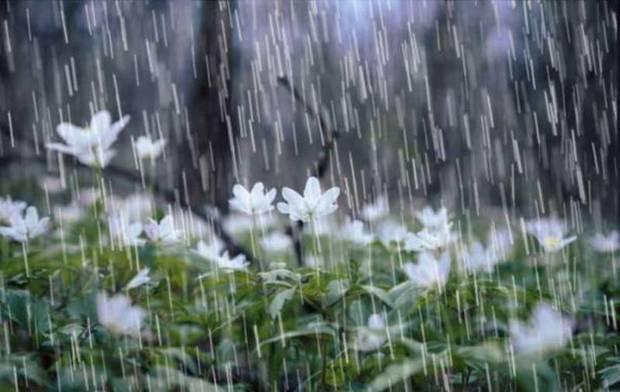 بارندگی ها در استان بوشهر تداوم دارد