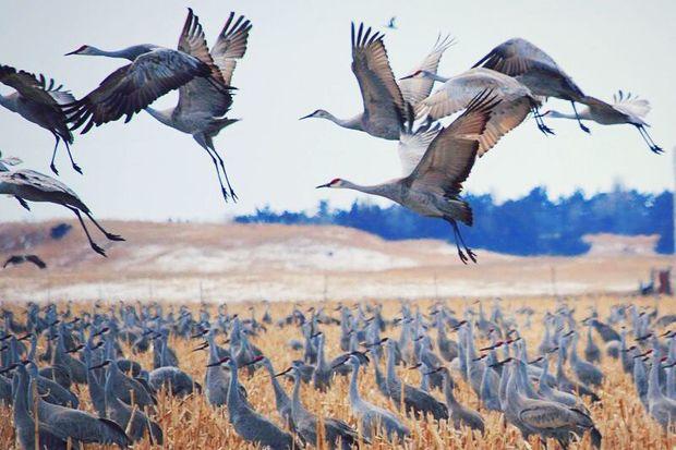 تالاب میقان اراک و ظرفیتی به نام اکوتوریسم پرنده نگری