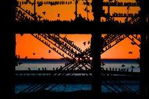 عکس/ لانه سارها بر روى پل «ویکتوریایى»