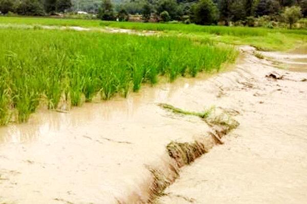 35 هزار کشاورز قزوینی خسارت دیده و بدهکار ناشی از حوادث غیرمترقبه به بانک ها هستند