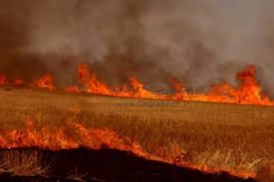 بیش از هشت هکتار از مزارع گندم روستای هلیل رود رابر طعمه حریق شد