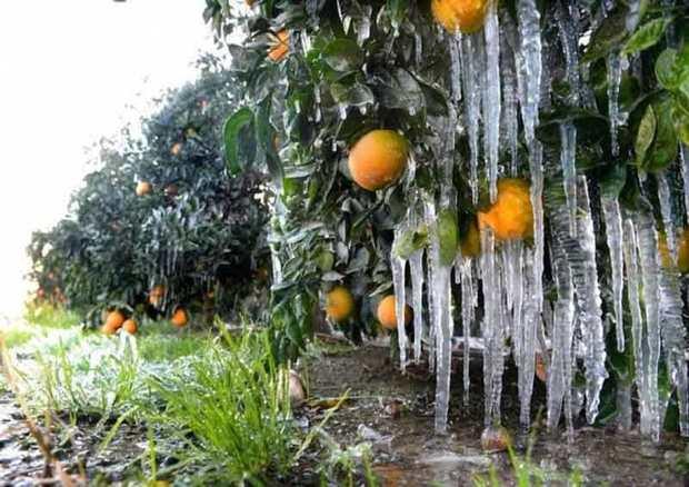 احتمال سرمازدگی محصولات کشاورزی فارس وجود دارد
