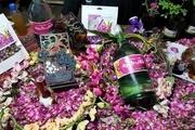 جشنواره گل محمدی در خوی برگزار شد