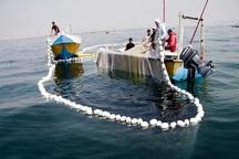 صید ماهی حلوا سفید در آب های خوزستان ممنوع شد