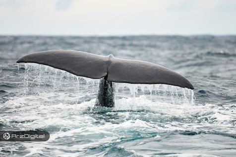 نتایج یک تحقیق: نهنگهای بیت کوین مقصر نوسانات آن نیستند !