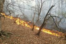 عملیات اطفای حریق جنگل های کجور ادامه دارد
