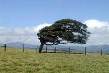 وزش باد شدید برای البرز پیش بینی شد