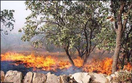 آتش سوزی در 282 هکتار از جنگلهای کهگیلویه و بویراحمد در سال جاری