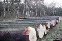 21مترمکعب چوب آلات قاچاق در لاهیجان کشف  شد