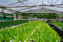 130 طرح کشاورزی به مناسبت دهه فجر در قزوین افتتاح می شود