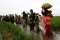 تعداد آوارگان روهینجایی در بنگلادش به 600 هزار تن نزدیک شد
