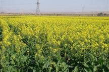 بیم و امیدهای رونق کشاورزی کهگیلویه و بویراحمد