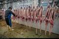 علل گرانی گوشت گوسفند از زبان مسئولان کرمانشاه
