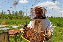 سرشماری کلنی های عسل البرز آغاز شد