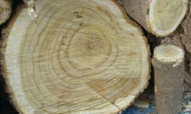 قاچاقچی 10 تن چوب جنگلی در اردبیل دستگیر شد