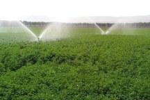 تغییر کشت درقم منجربه کاهش مصرف 90 میلیون متر آب می شود