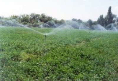 870 هکتار از مزارع دیم شهرستان آبدانان زیر پوشش شبکه آبی قرار گرفت