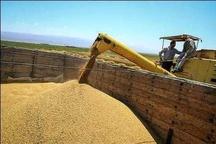 تسهیل در خرید تضمینی گندم  پرداخت به موقع وجه گندم به حساب کشاورزان کردستانی